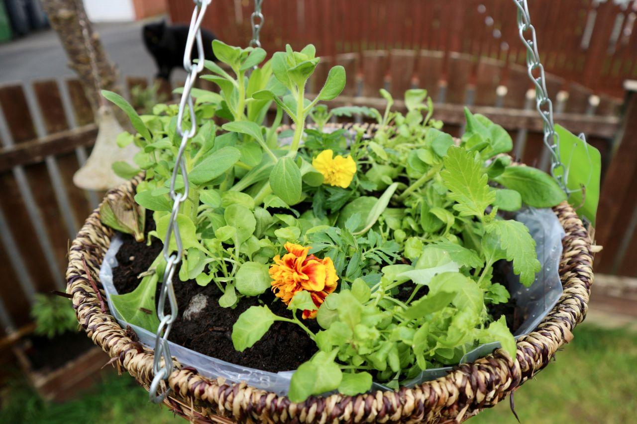 Bank Holiday Gardening - Hanging Baskets
