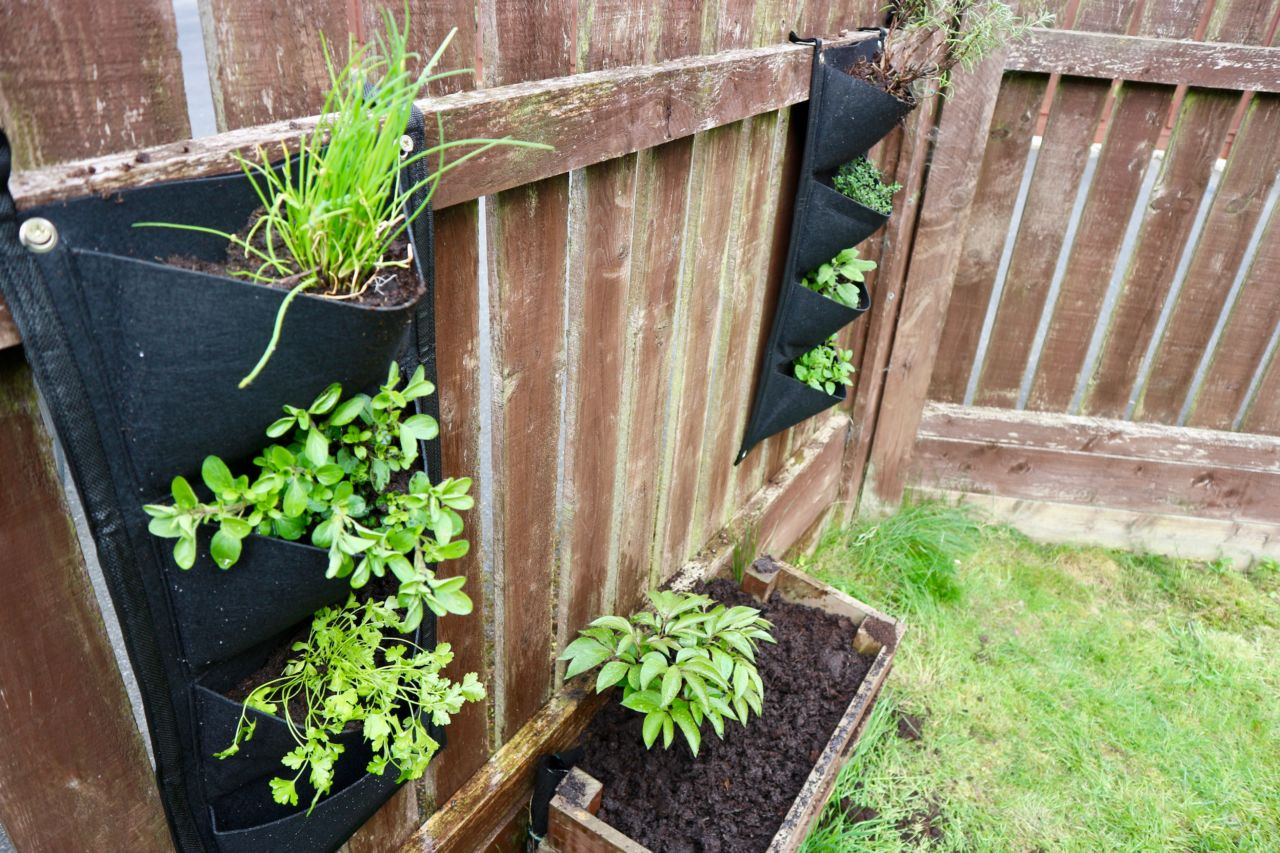 Bank Holiday Gardening