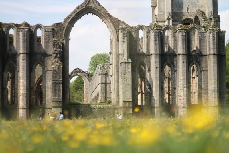 Fountains Abbey wildflower buttercup meadow