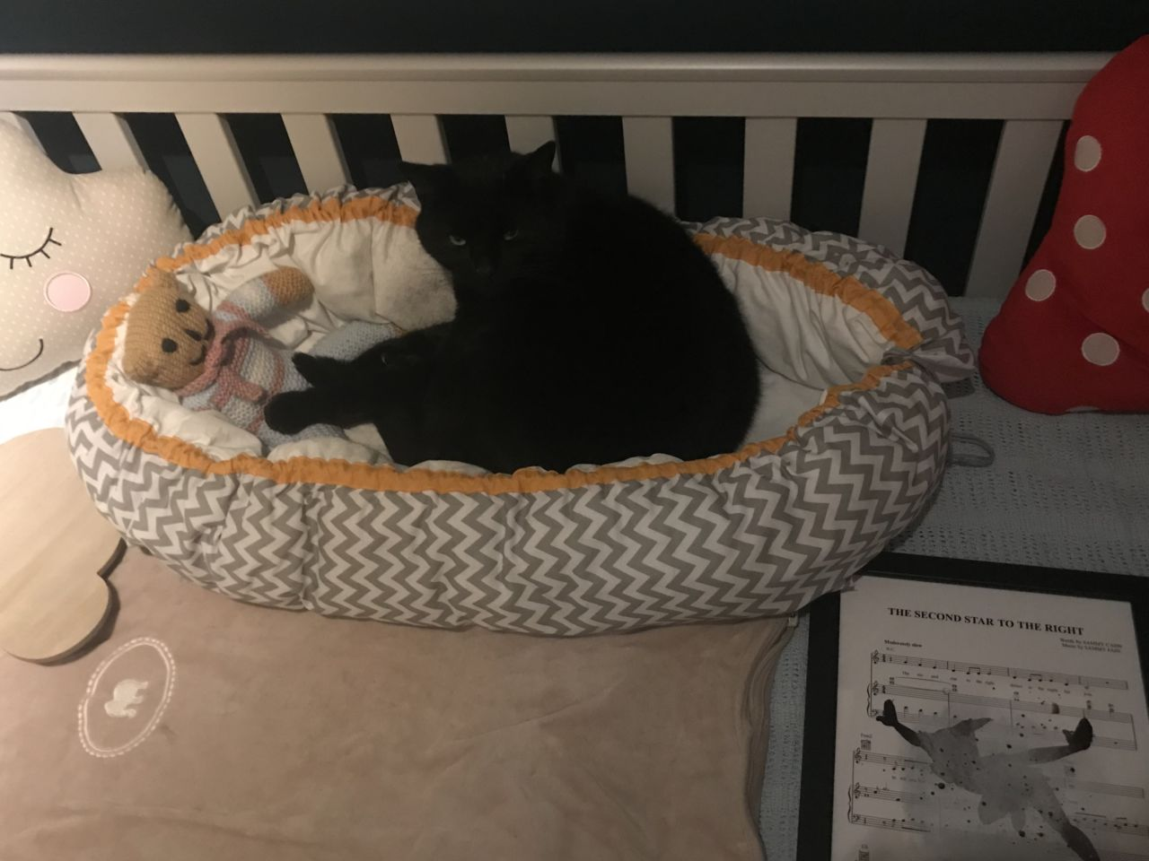 Charlie cat sleeping in the baby nest!