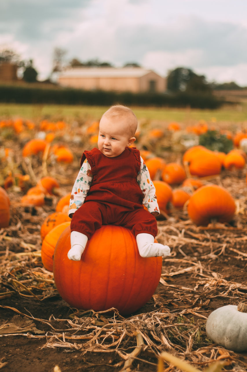 Baby at the Pumpkin Patch - Yorkshire Pumpkins